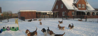 Basset Winter